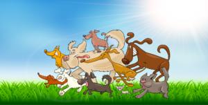 Paws4me dog training - we're back